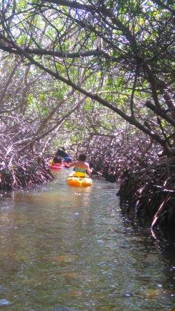 Mangrove Information Center Kayak & Snorkel Excursions: tunnel of mangroves