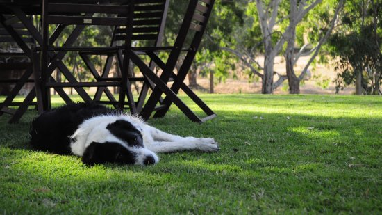 Willunga, Australia: Jazzy the cellar door dog!
