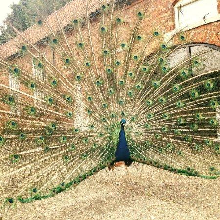 Brigg, UK: The Secret Garden Tearooms