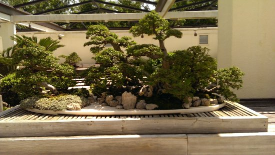 From The Bonsai Garden Picture Of U S National Arboretum Washington Dc Tripadvisor