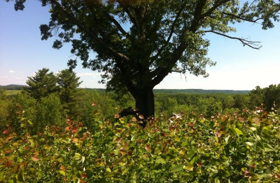 Stillwater, NY: pasture and oak