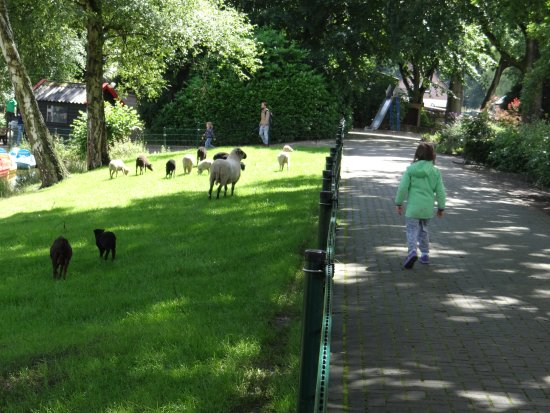 Kinderparadijs Malkenschoten: Male owieczki