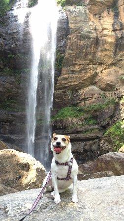 Toccoa Falls Resmi