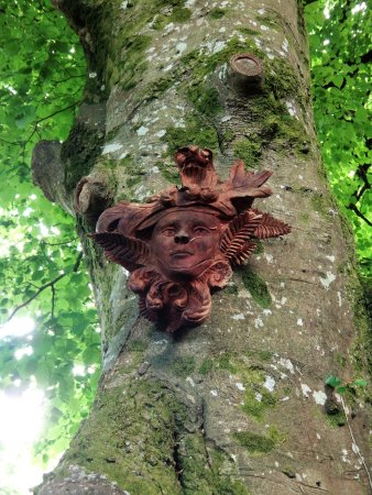 County Westmeath, Irlandia: Forest creatures...don't forget to look up.