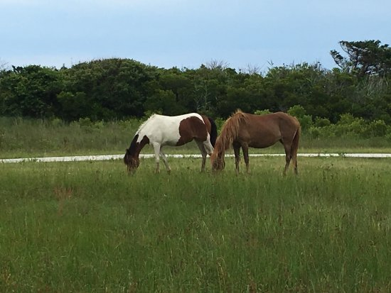 Assateague State Park Camping: photo3.jpg