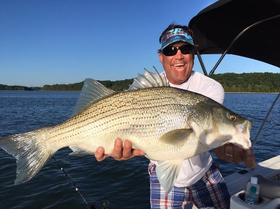 Ed Martin S Striper Hybrid Guide Service Nashville 2019 All You Need To Know Before Go With Photos Tripadvisor