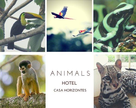Casa Horizontes Corcovado : Animals you can encounter in the garden
