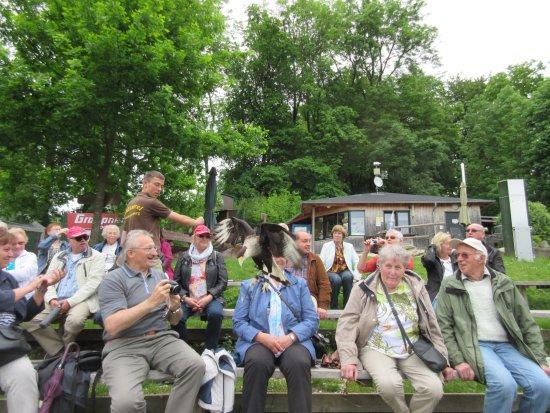 Wunsiedel, Tyskland: Zuschauertribühne, der Geier fliegt sogar auf den Kopf