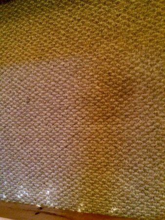 Butler, TN: pet urine it was every where there was carpet you couldn't get away from the smell and stains