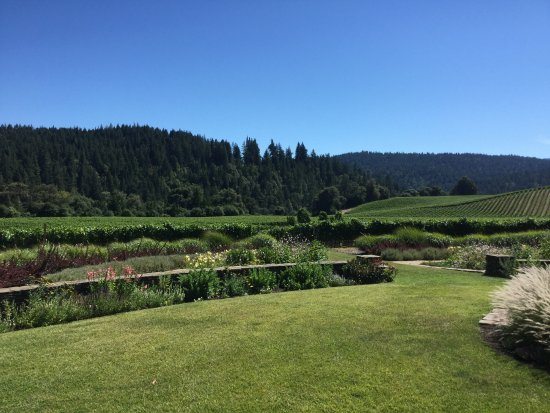 Goldeneye Winery: grounds and view