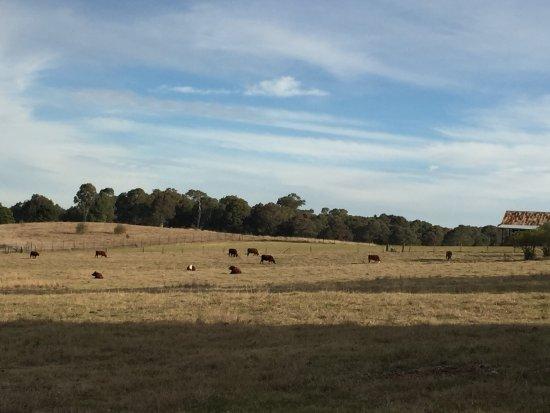 "Rouse Hill, Australia: Animals on the ""farm"""