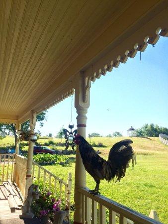 Shamrock Farms Bed and Breakfast: photo3.jpg