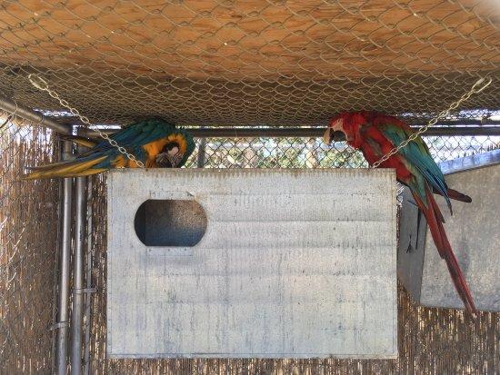 The Barry R. Kirshner Wildlife Foundation: photo5.jpg
