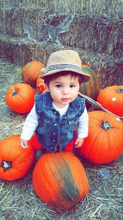 Cornbelly's Corn Maze & Pumpkin Fest: photo0.jpg