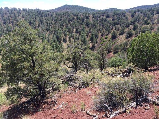 El Calderon Trail: photo4.jpg