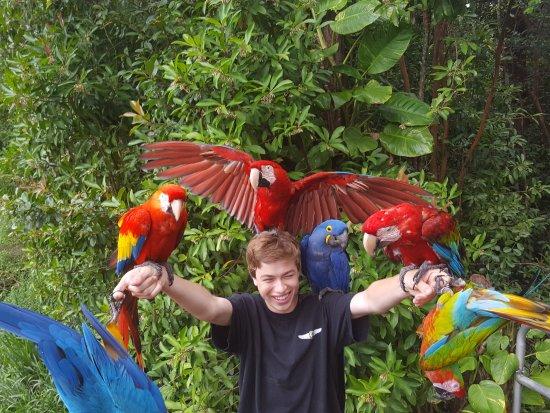 Haiku, Χαβάη: Posing with parrots.