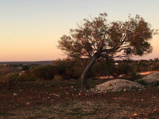 White Cliffs, أستراليا: photo2.jpg