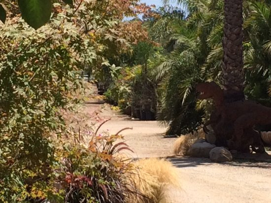 Island View Nursery Carpinteria 2018 All You Need To Know Before Go With Photos Tripadvisor