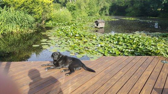 Eggpie B&B at Pond Cottage : 20160706_082910_large.jpg