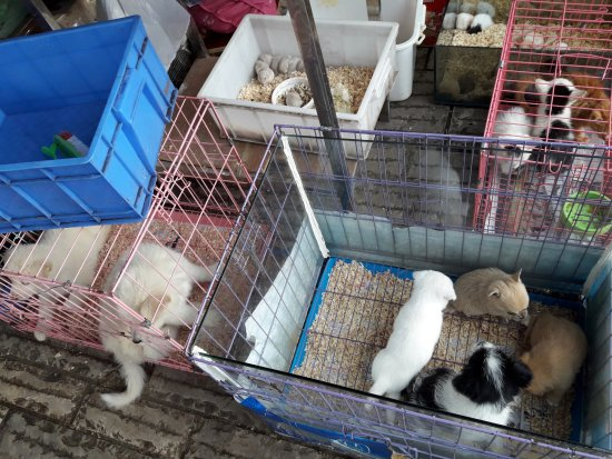Flowers and Birds Market of Kunming: Rodents on display for sale