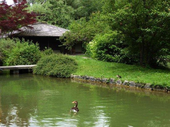 Japanischer Garten München japanisches teehaus bild englischer garten münchen tripadvisor