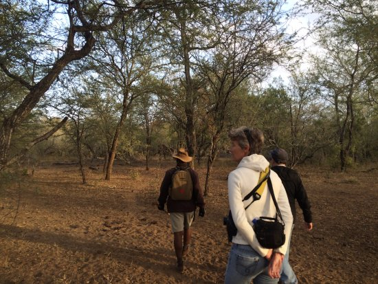 Ndlovu Camp: Bush walk