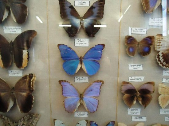 коллекция из бабочек