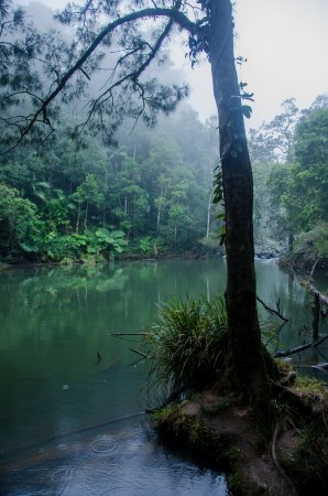 Eungella, Australia: Misty outlook at the clowds covered the mountains