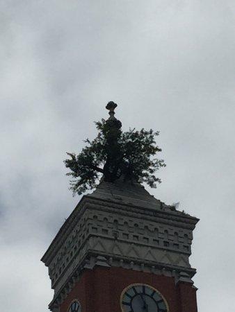 Greensburg, IN: Tree