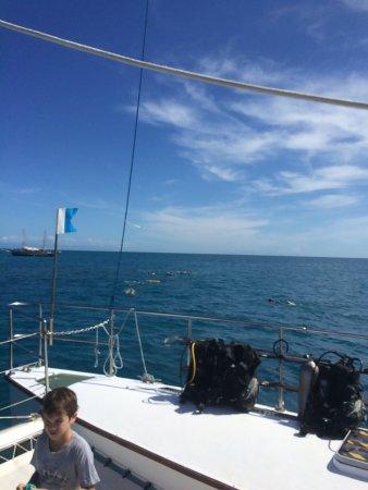 Reef Daytripper照片