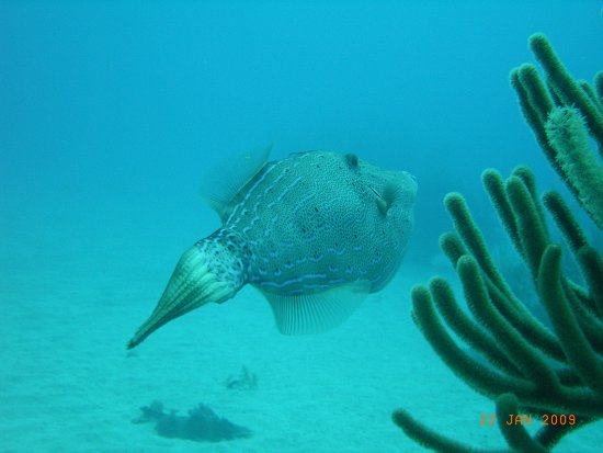 Weird Fish Picture Of Caribbean Divers Freeport Tripadvisor