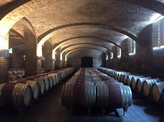 Nizza Monferrato, İtalya: Barolo wine tour