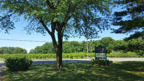Sunnybrook Winery