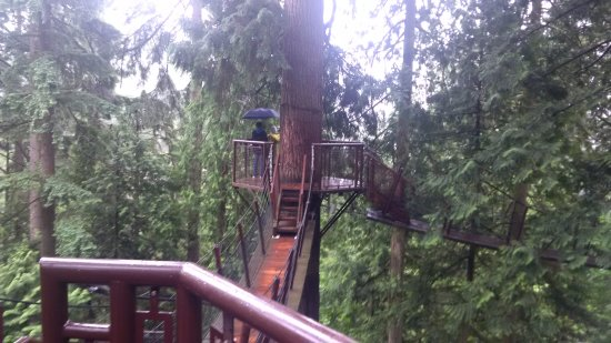 North Vancouver, Canadá: One of the tree top pathways
