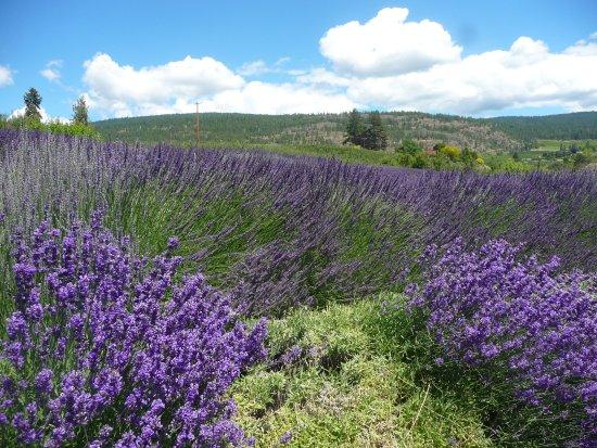 Forest Green Man Lavender