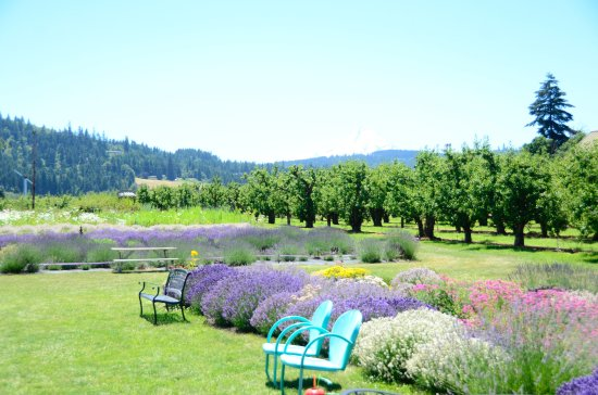 Hood River, OR: Bring a picnic lunch and just hang out for awhile
