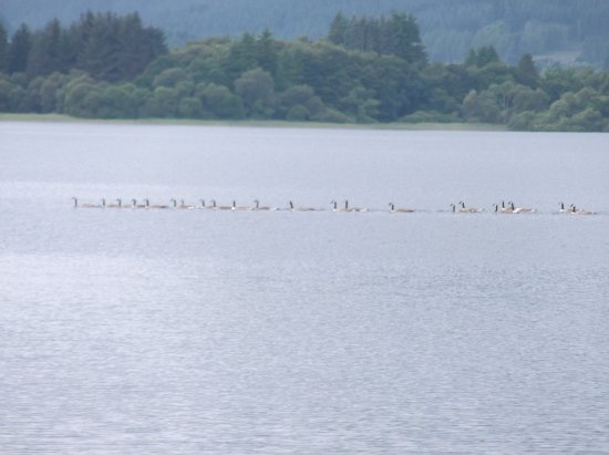Port of Menteith, UK: Not only ducks on the water