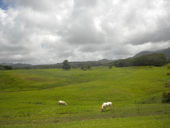 Hawaii Movie Tours: Jurassic Park Ranch