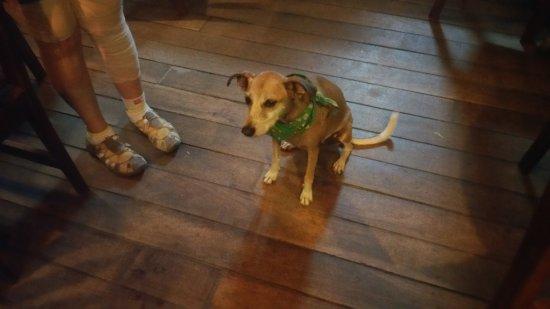 Dawn's Grill N Go: Sweety - Dawn's ever present dog.