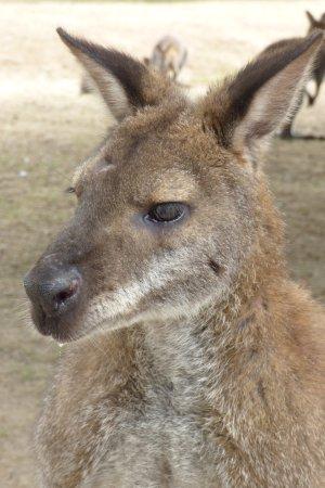 La Possonniere, France : portrait marsupial ....