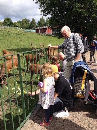 Hoor, Suecia: Flera generationer på besök!
