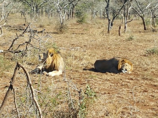 Zebra Hills Safari Lodge: 20160703_100851_large.jpg
