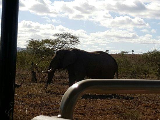 Zebra Hills Safari Lodge: 20160703_105504_large.jpg