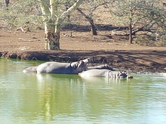 Zebra Hills Safari Lodge: 20160703_104847_large.jpg