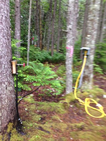 New Harbor, ME: convenient water and electric at campsites