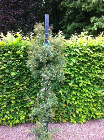 Ruisbroek, เบลเยียม: Toujours du côté de la roseraie japonaise