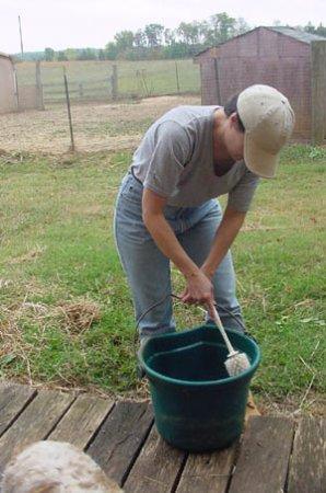 Red Oak, VA: Helping with farm chores