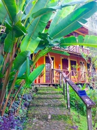 Isla San Cristobal, Panama: Hideaway pathway