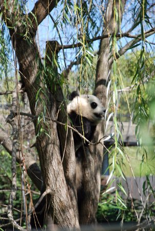 The best public zoo in the US: fotografía de National