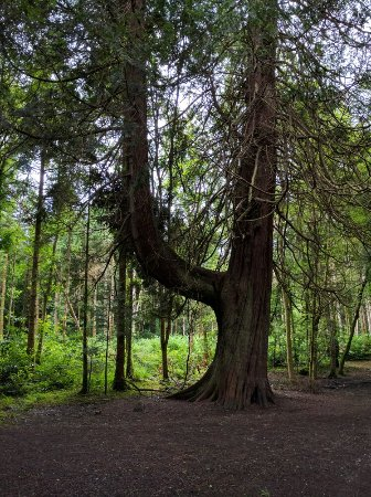 Parque Forestal Lough Key: IMG_20160703_123919_large.jpg